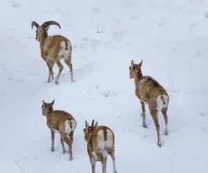 تصاویری از حیات وحش لواسان در زمستان