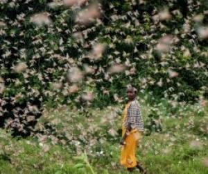 هجوم میلیاردها ملخ در کنیا