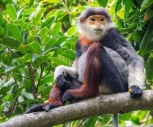 تصاویری از گونههای عجیب میمونها