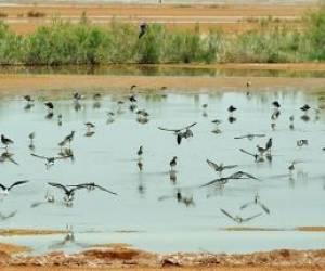 تالاب مره -بهشت پرندگان مهاجر