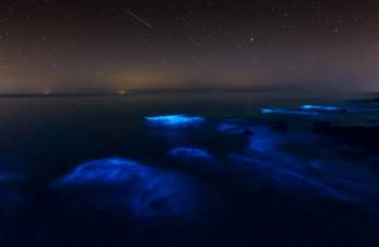 تصاویر انعکاس نور پلانکتونها در خلیج فارس