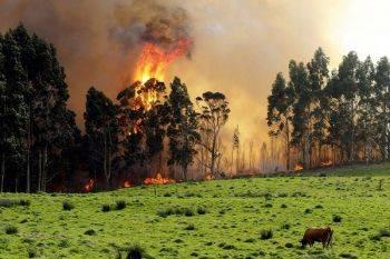 آتش سوزی در جنگل های اسپانیا