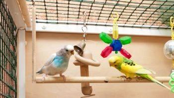 اسباب بازی های مرغ عشق