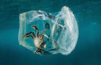 تاثیر رها کردن زباله در طبیعت بر زندگی حیوانات