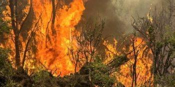 آتش سوزی مهیب در جنگلهای آمازون در برزیل