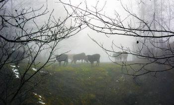 طبیعت زمستانی سیاهکل