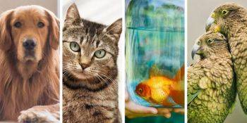 کدام حیوانات خانگی مستعد ابتلا به کرونا ویروس هستند؟
