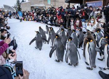 رژه پنگوئنها در باغ وحش