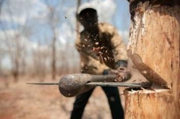 نابودی درختان در آمریکا