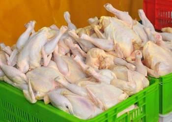 مرغ ارزان شد / اما فقط 100 تومان در هر کیلو