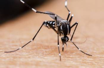درمان نیش پشه | درمان های خانگی جای نیش حشرات