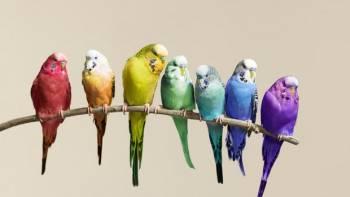 بهترین پرنده ها برای نگهداری در خانه کدام اند؟
