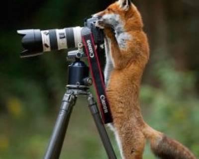 تصاویر جالب و دیدنی حیوانات